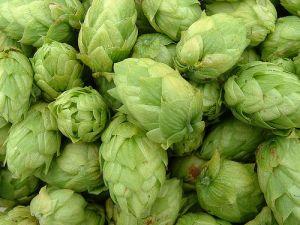hops, beer, brewing, flavor