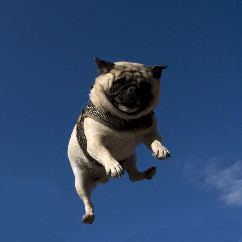 What.  No Mints?MenuTag Archives: flying pugJust a little pick-me-up…Search WNMTopicsArchives